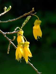 Top 17 trees to feed bees in New Zealand year round – thisNZlife - Modern Tui Bird, Feeding Bees, Short Trees, Bee Friendly Plants, How To Attract Birds, Vegetable Garden Design, Garden Pictures, Flower Images, Monarch Butterfly