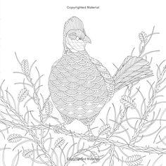 Wild Savannah: A Coloring Book Adventure (A Millie Marotta Adult Coloring Book): Millie Marotta: 9781454708964: Amazon.com: Books