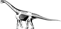 Camarasaurus grandis. Dinosauria, Saurischia, Sauropodomorpha, Camarasauromorpha, Camarasauridae, Camarasaurinae. Auteur : Scott Hartman, 2011.
