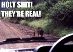 Timon and Pumba in real life! Timon Und Pumbaa, Funny City, Funny Commercials, Hakuna Matata, Laugh Out Loud, The Funny, Funny Ads, I Laughed, Laughter