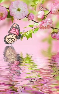 Pink butterfly by Live Wallpaper Workshop Butterfly Kisses, Butterfly Flowers, Beautiful Butterflies, Beautiful Flowers, Yellow Flowers, Butterfly Pictures, Monarch Butterfly, Water Flowers, Green Butterfly