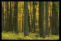 New England Foliage - photo.net