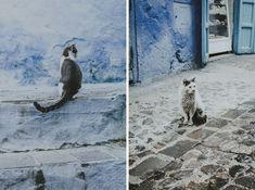 Niebieskie Miasto Chefchaouen - Szafszawan koty Blog