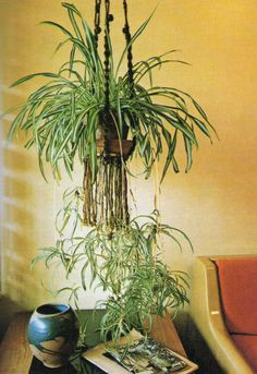 Awesome combination, Macrame and spider plants, take me straight back to the I BELONG.