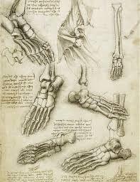 Image result for anatomy drawings by leonardo da vinci