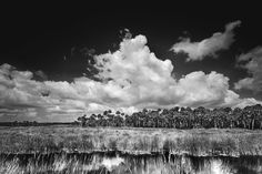 Tamiami Trail 1 - Clyde Butcher