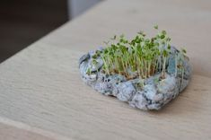 Recycled Paper Crafts, Diy And Crafts, Egg Box Craft, Seed Bombs, Pinterest Diy, Garden Seeds, Diy Planters, Diy Projects To Try, Diy Cards