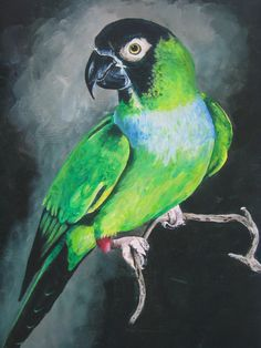 Nanday Conure Painting!