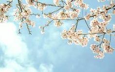 Bilderesultat for Spring