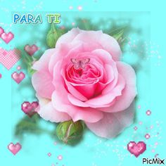 Gifs, Flowers For You, Pink Roses, Kaleidoscopes, Plants, Friendship, Good Morning Wishes, Photomontage, Night