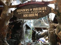 You can also find amazing indoor attractions that showcase the wonders of nature. The Wonders of Wildlife National Museum and Aquarium is Springfield's newest attraction and it was recently voted as the number one attraction in the nation! Weekend Fun, Weekend Trips, Indoor Attractions, Branson Vacation, Kansas Missouri, Springfield Missouri, National Museum, Natural Wonders, Places To Visit