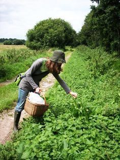 Foraging for Wild Food. Many wild plants are very rich in nutrients and phytochemicals needed by our bodies. Permaculture, Farm Business, Edible Wild Plants, Wild Edibles, Hobby Farms, Urban Farming, Crop Farming, Medicinal Plants, Herbal Medicine