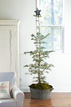 RUSTIC WOODSY BALSAM CHRISTMAS TREE - Home of Alison Westlake of Coriander Girl, photography by Sian Richards (via the marion house book)