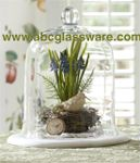 "Glass Cloche or English Belljar7""x10""H Pieces  $70 for 4"
