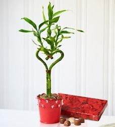 Cute way to display heart shaped Lucky Bamboo!