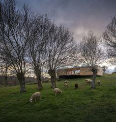 landscape-yellows-muse-cabin-retreat-4-east.jpg