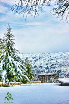 #Barouk Cedars  أرز #الباروك By Rami Bou Alwan  #Lebanon