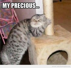 funny | Funny Pictures | animals | Funny cat protecting his pole