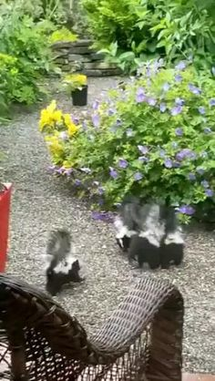 Cute Funny Animals, Funny Animal Pictures, Cute Baby Animals, Animals And Pets, Skunks, Nature Gif, Water Animals, Animal Antics, Fluffy Animals