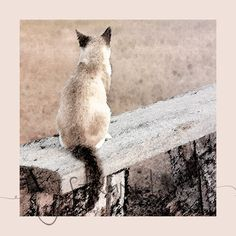 Looking Out - 12x12 digital painting - pastel - watercolor - fine art print - cat