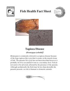 Tapioca disease (Henneguya zschokki). Fish health fact sheet, by the Oregon Department of Fish and Wildlife