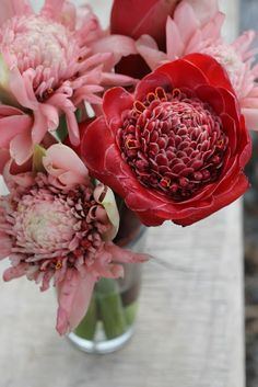 technically not protea, but these torch ginger costa rican flowers are great mates. kittens and pitbulls