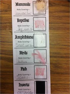 *Teaching Maddeness* Animal Classification- Also has a great idea for flashcard storage