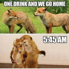 Animals is most funny and humor. They do natural things with some fun. But they are not understand what that they doing.Just see and Read these Animals Humor memes. Funny Shit, Funny Cute, Funny Jokes, Funny Pics, Funny Drunk, That's Hilarious, Funny Captions, Memes Humor, Frases Humor