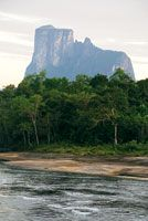 Selva de mediana altura, de 15 a 20 m, que crece sobre los suelos desarrollados en las areniscas del Escudo Guayanés, y constituye la vegeta...
