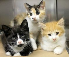 Adorable 2-month-old kittens are out of time at high-kill upstate shelter