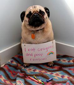 Awww he/she looks so pitiful! Forgive already so he/she may be happy again!