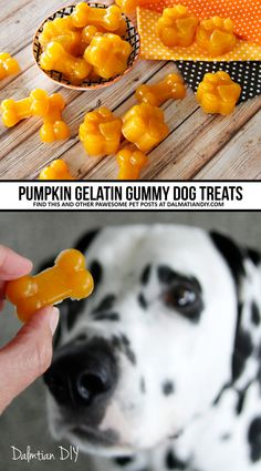 This gelatin gummy dog treat recipe is quick, easy, and makes a simple healthy pumpkin-based dog treat. It can also be easily adapted to other dog-friendly gummy treat ingredient combinations. No Bake Dog Treats, Dog Treats Grain Free, Frozen Dog Treats, Grain Free Dog Food, Puppy Treats, Diy Dog Treats, Homemade Dog Treats, Homemade Recipe, Dog Biscuit Recipes