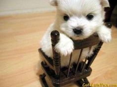 Cute Baby Puppies | Very cute baby puppies pictures 1