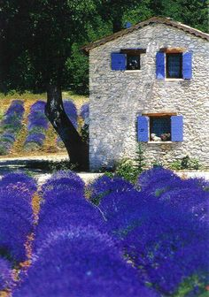 Lavender fields of Provence, France, Must go some day. Provence is a beautiful place.there is also lavender icecream. Beautiful World, Beautiful Places, Beautiful Gorgeous, Absolutely Stunning, Places To Travel, Places To Visit, Lavender Fields, Lavander, Lavender Blue