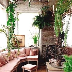 Indoor plant perfection + pink couch goals  #indoorplants #decor #home #couch #lounge #pink #feen #light #window #perfection
