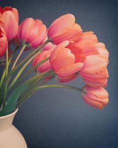 "Tulip Still Life Flower Photography Print ""Tulips No. 9"""
