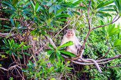 Monkey island at Cat Ba, Ha Long Bay in Vietnam silhouette