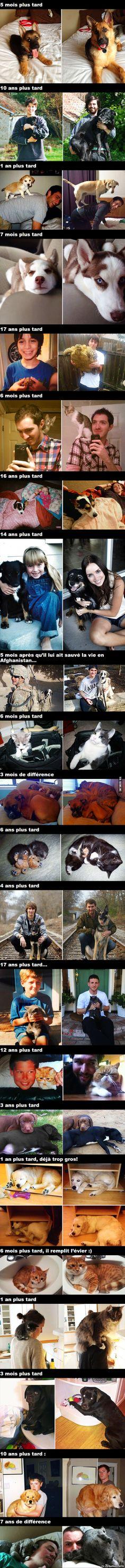 Des animaux qui ont grandi, Avant et Après