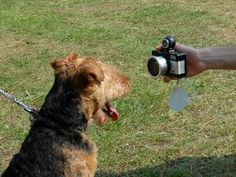 The Best Dog Photography Tips For Dog Owners by @FunDogs The Fun Times Guide to Dogs - Lots of tips and resources here!