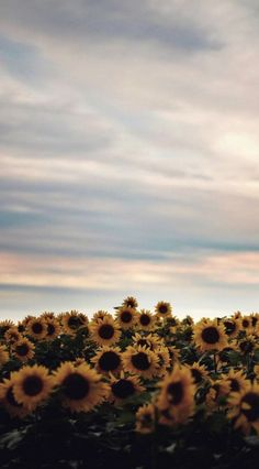 95 Super Perfect Sunflower Wallpaper for Your iPhone Iphone Wallpaper Vsco, Iphone Background Wallpaper, Nature Wallpaper, Cool Wallpaper, Computer Wallpaper, Aesthetic Pastel Wallpaper, Aesthetic Backgrounds, Aesthetic Wallpapers, Sunflower Wallpaper