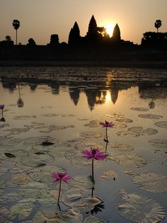~~Water Lillies at Dawn, Angkor Wat by Further to Fly~~