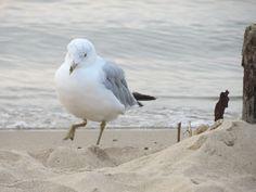 Gull Beach 7