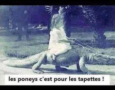 Les poneys c'est pour les tapettes! <3 Lol