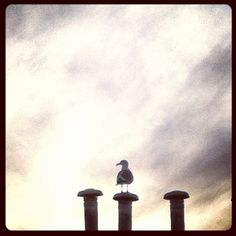 Seagull watching the sunset #Vancouver