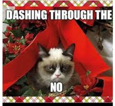 I love Grumpy cat!