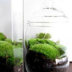 HOW TO GROW MOSS? HOW TO CREATE A MOSS TERRARIUM.
