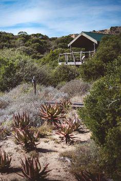 HillsNek Safari Camp, Amakhala Game Reserve, Südafrika - Liebevolle Gastfreundschaftim romantischen HIDDEN GEMim Eastern Cape Wir lieben Afrika einfach! Die Natur, die Menschen, die Tiere, den tollenWein und das leckere Essen! Und auch diese Safari-Lo…