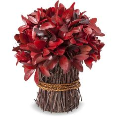 "Smith & Hawken Fall Dried Red Bundle - 10"" (26 CAD) ❤ liked on Polyvore featuring home, home decor, floral decor, flowers, fillers, fall, flowers / foliage, artificial flowers, decorative accents and silk flowers"