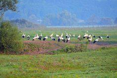 Különleges látványt nyújtanak a vonulásra kész gólyacsapatok   Sokszínű vidék