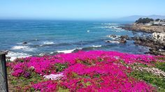 "Cambria # VisitorSnapshots by Visit Cambria.  ""Cambria is full of beautiful wildflowers during the springtime. This visitor snapshot, from Facebook user Pam Langley-Hansen, will make you want to head out to Fiscalini Ranch before the season is over""."